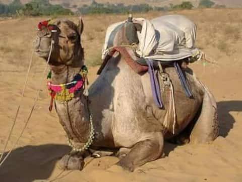 CAMEL SAFARI TOUR AND SLEEP ON THE SAND DUNES