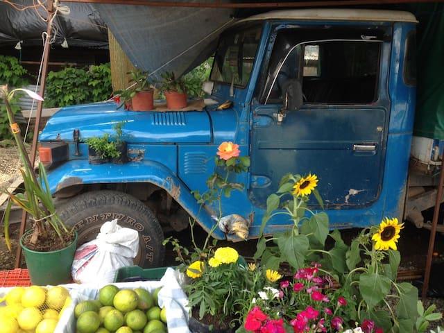 Farmers Market Quepos