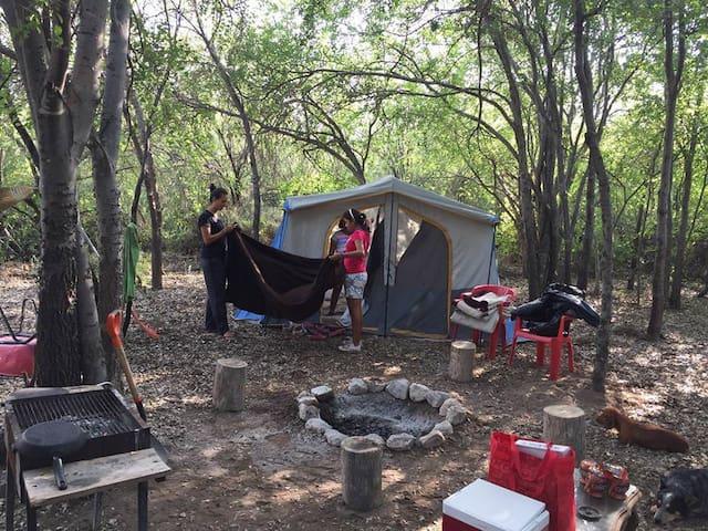 El abuelo Woods Zona de Camping