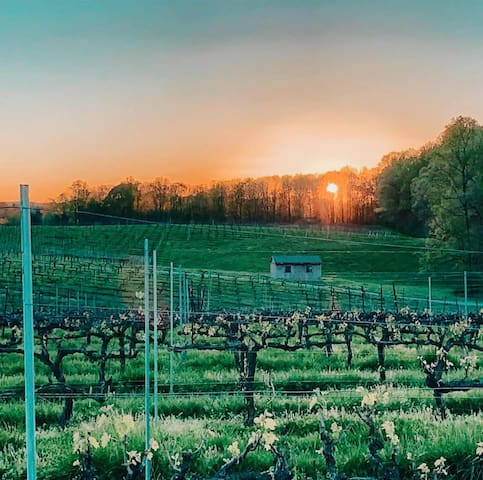Sunset in the vineyard.