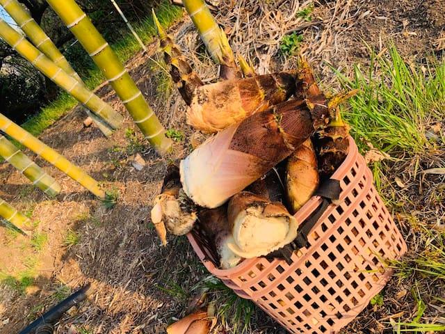 車で15分。妙義山の麓に住むお友達の竹薮で筍掘りさせてもらいました。掘ったら直ぐに茹でます。