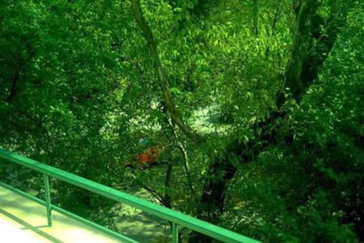 Gemütliches Einzelzimmer in grüner Umgebung