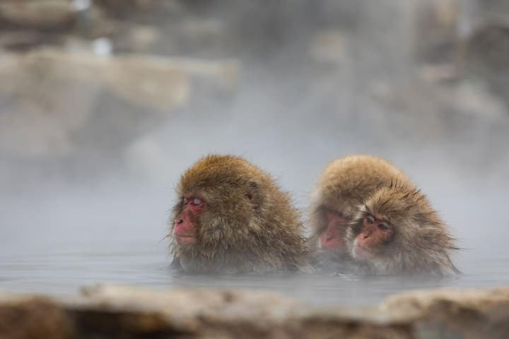 [Breakfast Incl.]Nostalgic Hot Spring Ryokan close to Jigokudani Wild Monkey Park