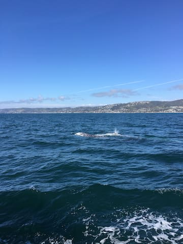 Whale sightings March 2017 - Dana Point.