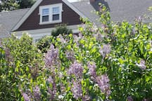 Exterior with lilacs in springtime