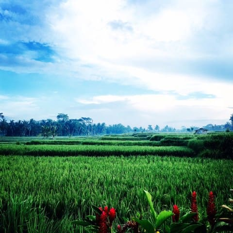 Secret Private Room with Rice field - Ubud - Loft