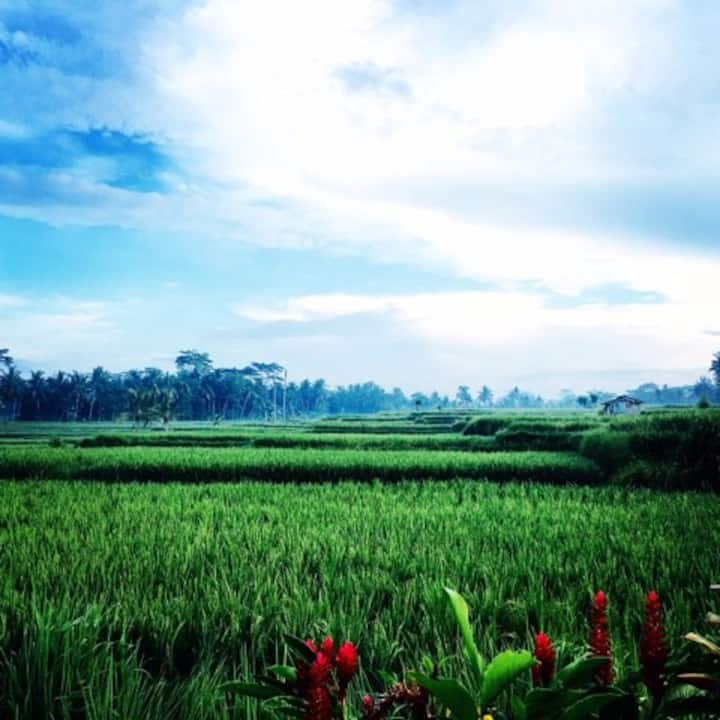 Secret Private Room with Rice field