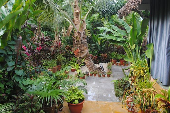 Jolie jardin tropical
