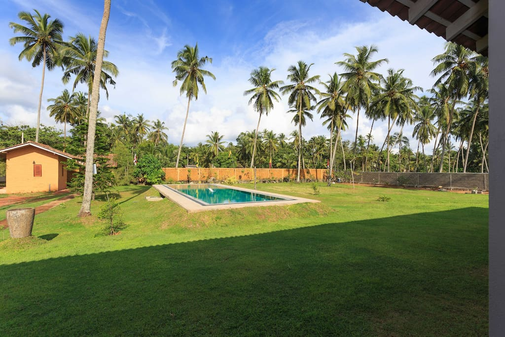 Beautiful garden & pool view with tropical coconut trees