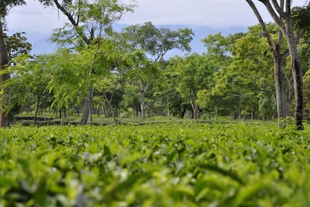 Sapoi Tea Farms :Estd 1914 - Dhekiajuli, Sonitpur District - Apartmen