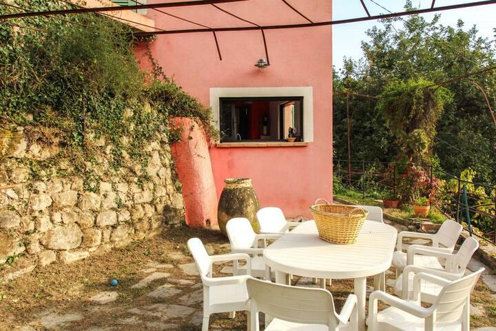 terrasse cote soleil, mandarines et avocats du jardin