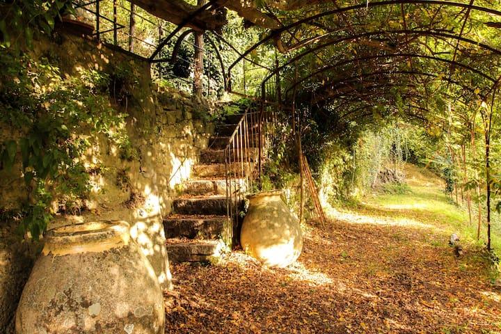 chemin d'accès a la maison sous la tonnelle