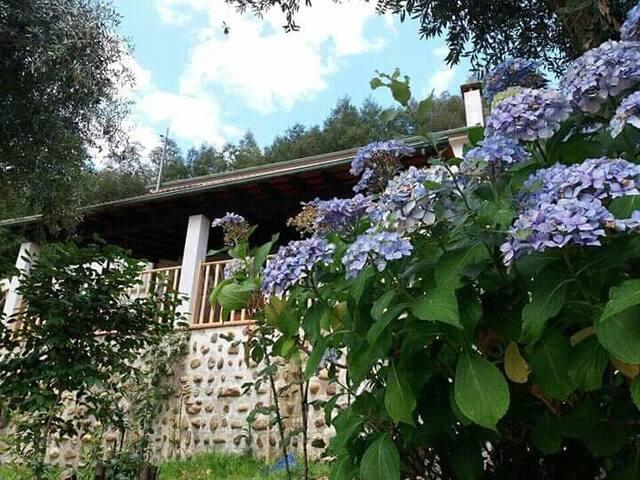 Magnolias Cottage