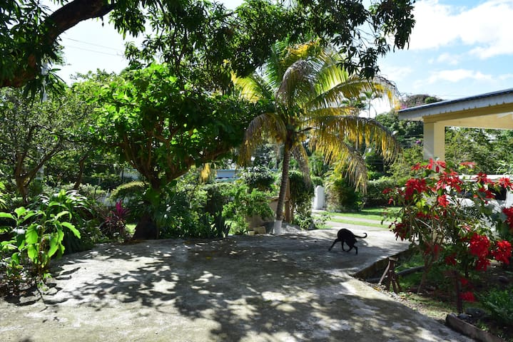 Wide pathway to the flat, separate from the pathway to the main house. Tall tropical trees provide perfect shade.