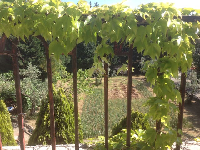 The vegetable garden seen from the balcony