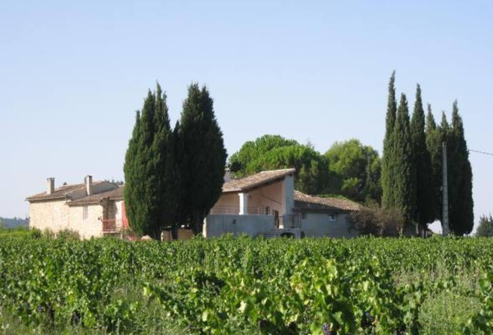 Le Moulin Neuf, façades nord et est, au milieu des vignes, et parc.