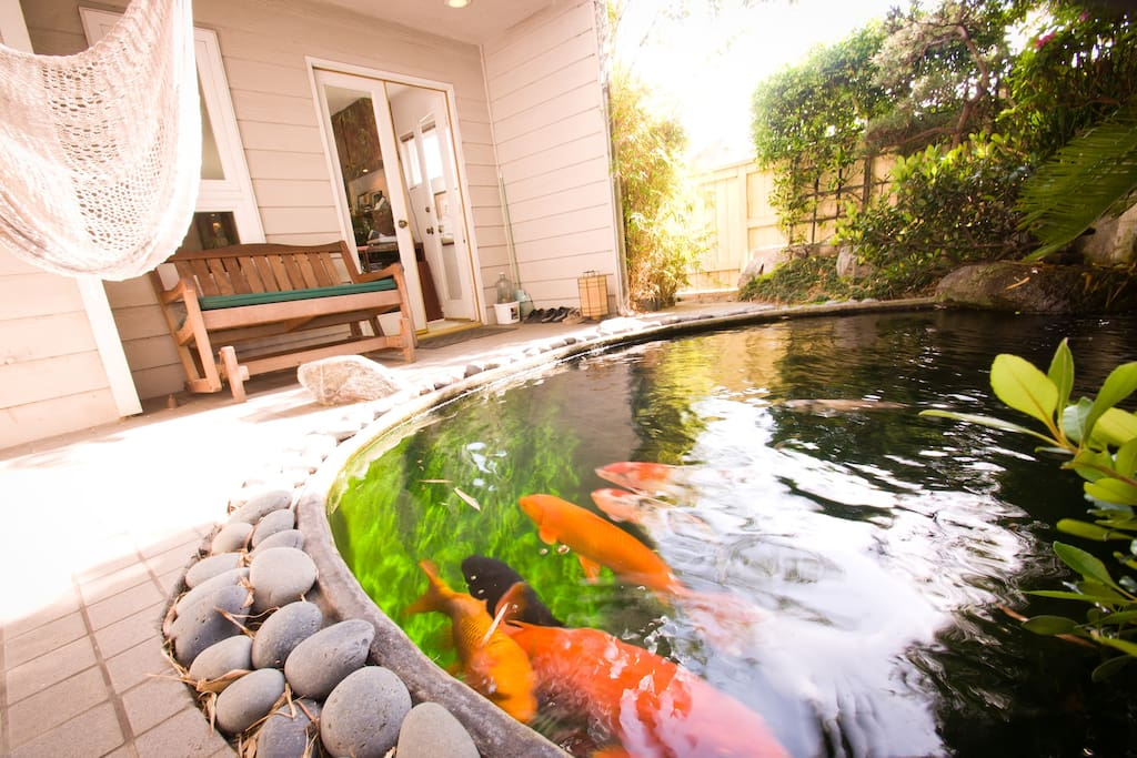 Swing in the sun and watch our Koi circle  like jewels in the water below