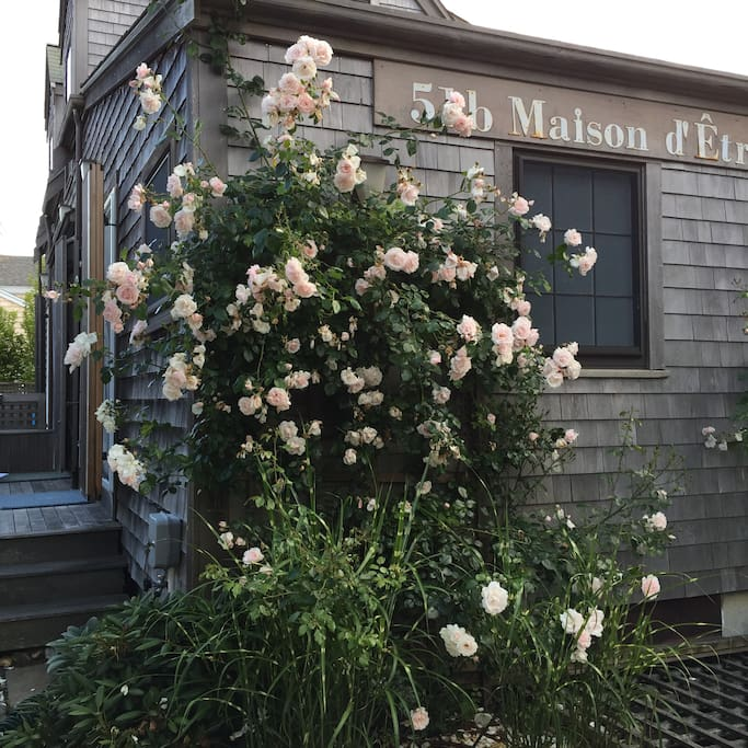 Driveway view with climbing roses