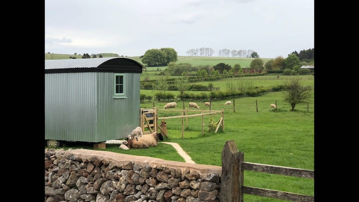 'Tin-Tin' Shepherd Hut, Newlands Farm, BA5 3ES
