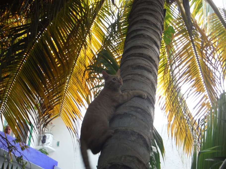 Coconuts for free if you get up the tree ;)