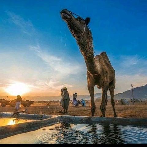 sangram desert camp