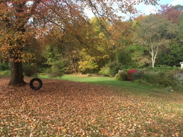 Backyard in the fall.