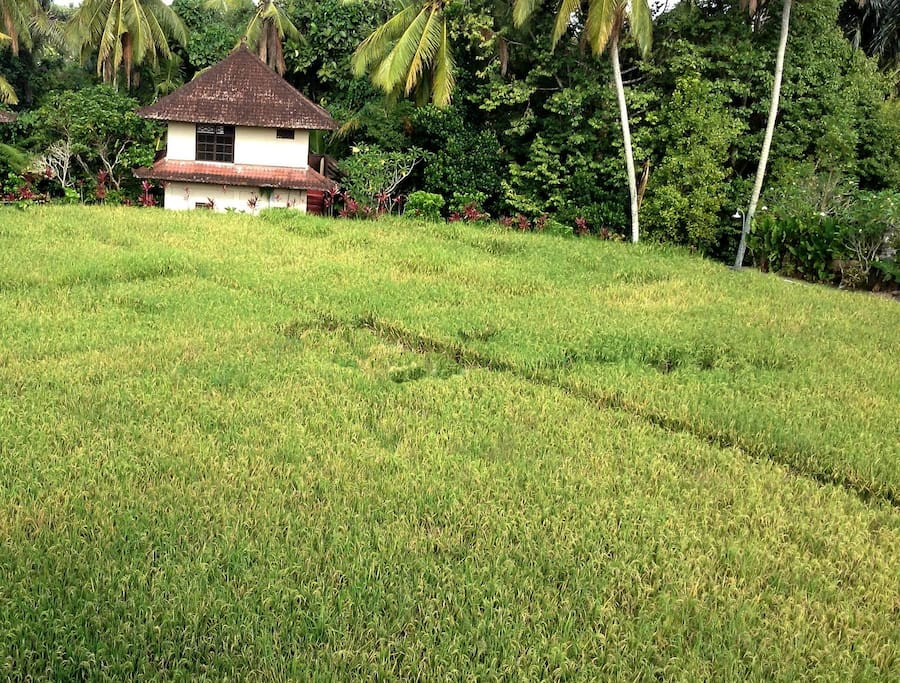 SOLO from the rice fields. Your apartment is at the 1st floor, facing the Jungle (East side)