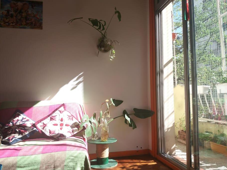 Plantas de interior.en la habitación en alquiler.