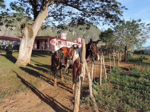 Casa el Cowboy , Carlos Millo a caballo en valle!