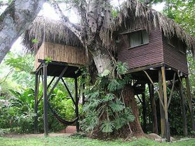 Parrot Nest Treehouse 1 - Bullet Tree Falls