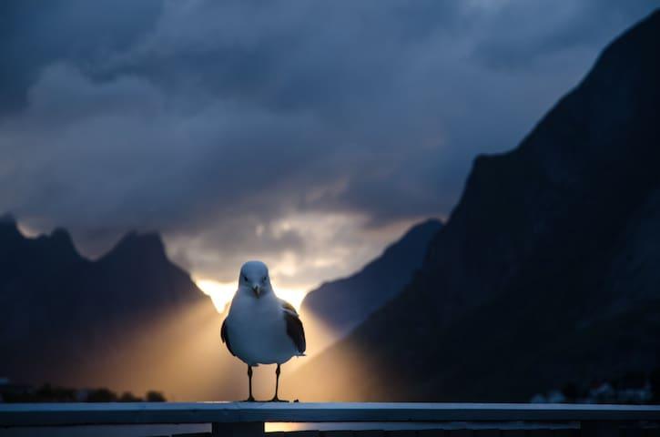 Seagull on my terrace