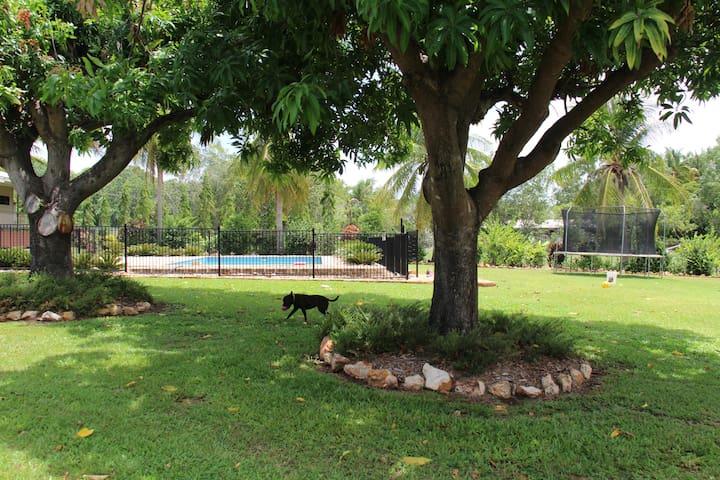 Mango trees provide lovely shade next to the pool
