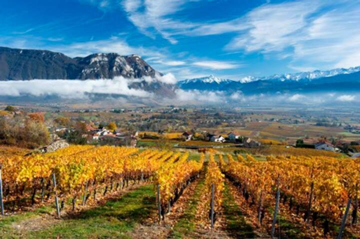 Le LIEU pour se détendre, au coeur des vignobles !