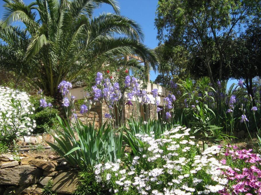2, jardin du bas au printemps