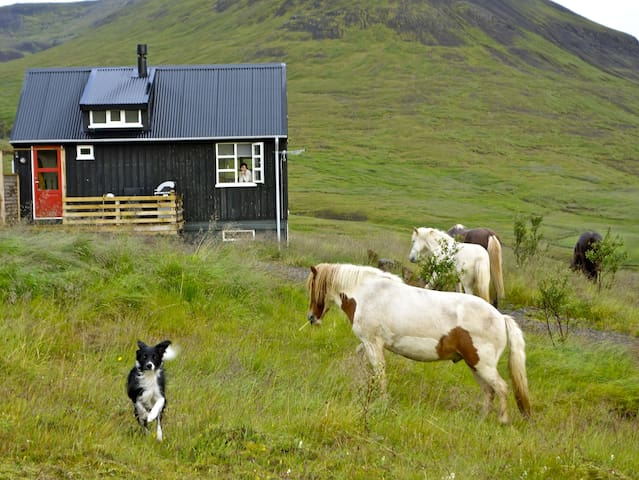 There are horses around Kolsstaðir from May until January
