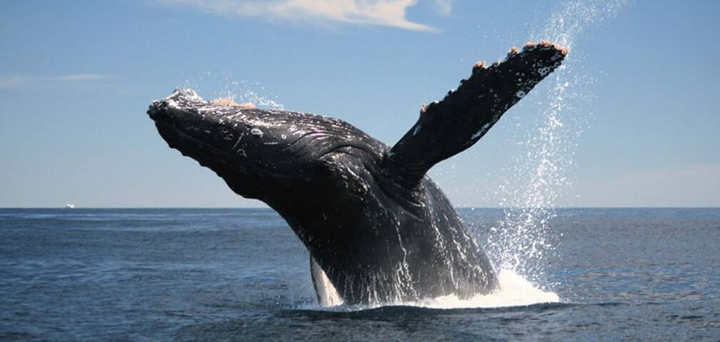 Whale Watching paradise