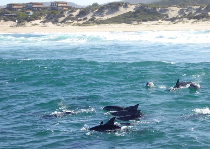 Spot dolphins, whales, seals, penguins and more