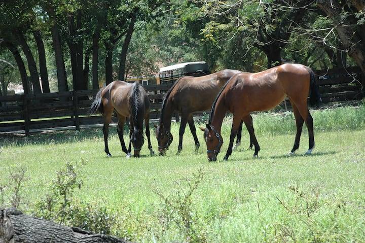 Horse Farm on a Beautiful Lake