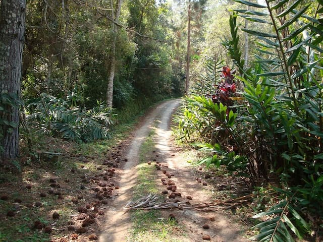 Sítio Maria Flor - Paraíso Nativo