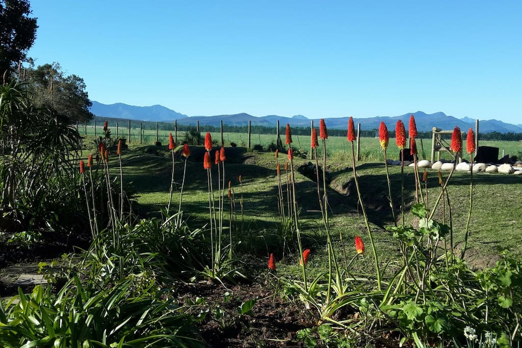 The cottages have expansive views of the majestic Outeniqua Mountain Range.