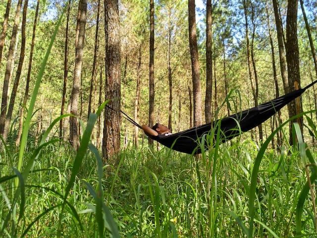 kampung wisata batik pekalongan - Tirto - Lejlighed