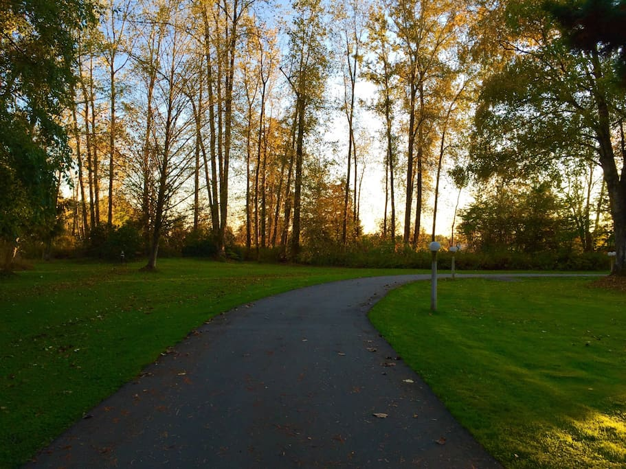 The driveway to the barn
