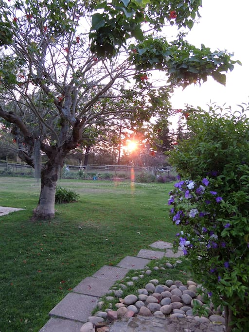 Sunset over the organic veggie patch