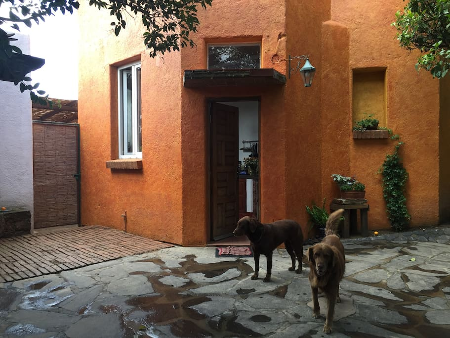 Second house entrances, you can see our pets, who live in the garden and behave well