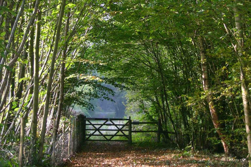 Our woodland path, leading up to a wonderful view over the Myddfai hills