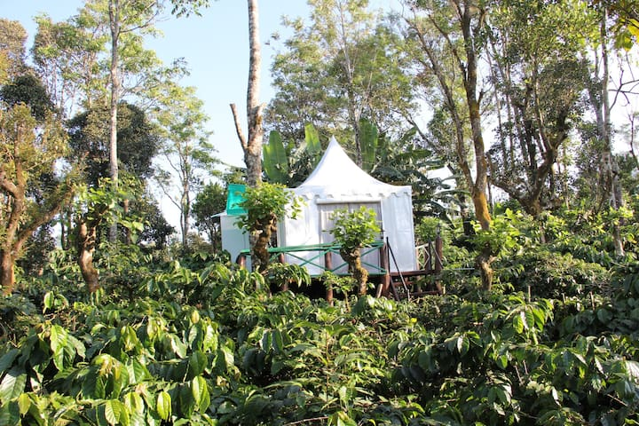 Coorg Tent House - Madikeri