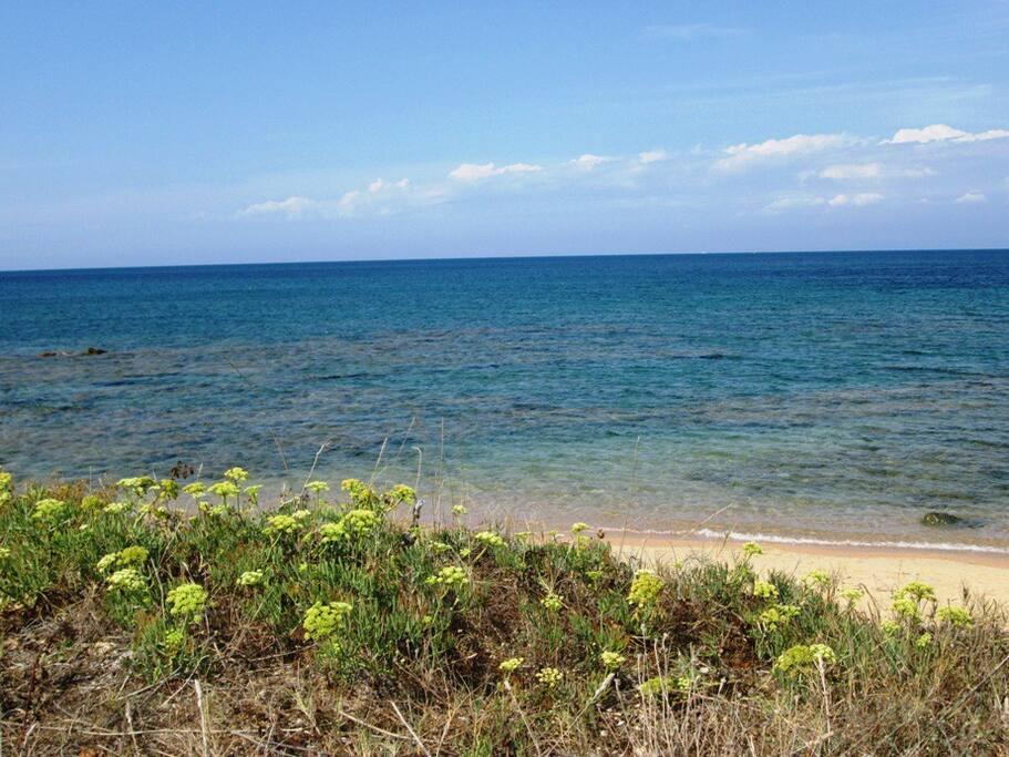 Great Local Beaches!