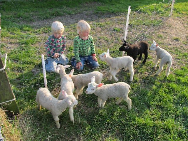 In de weilanden rondom lopen schapen met in het voorjaar veel lammetjes