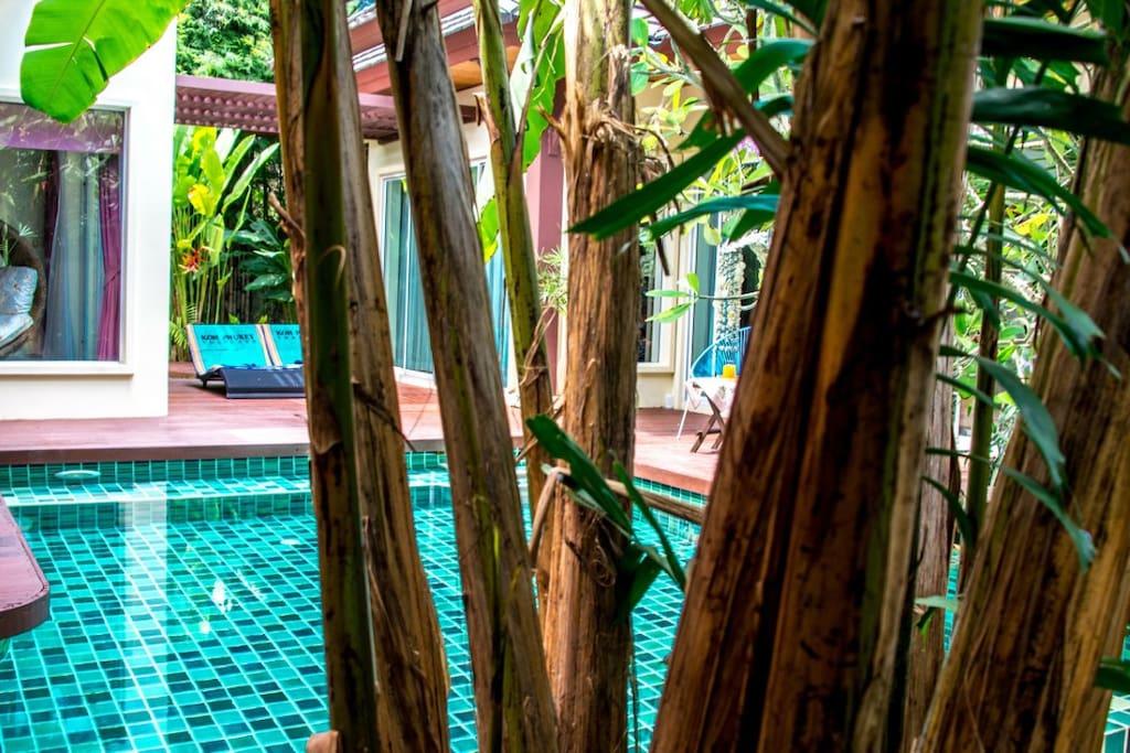 Intimité au milieu d'une magnifique végétation tropicale