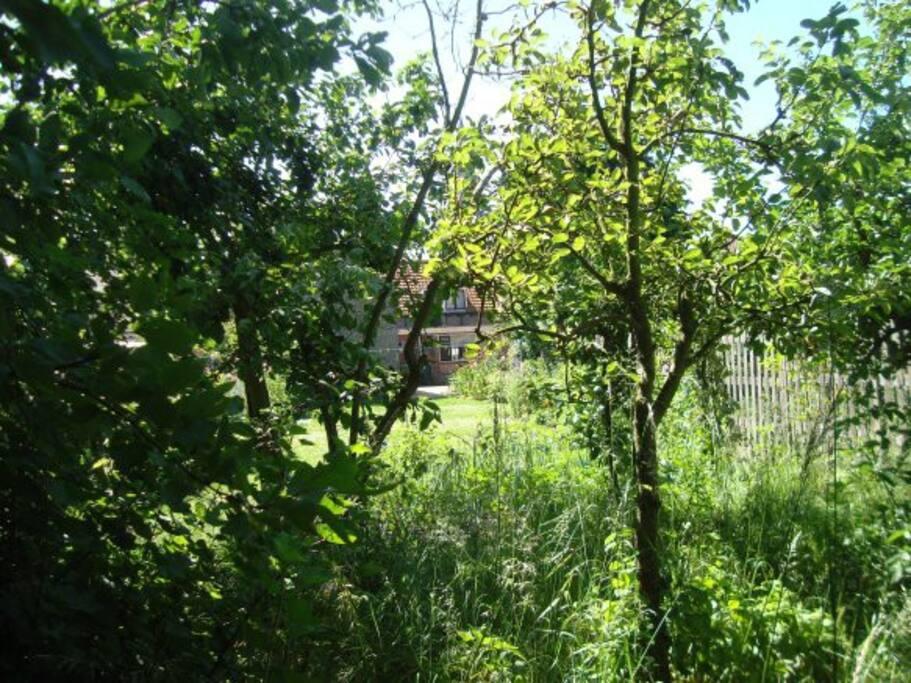tuin + achterkant huis, gezien door de fruitbomen